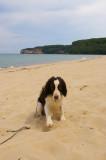 Post Fetch - Miner's Beach