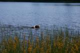 Dog in Mirror Lake