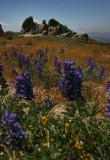 Wildflower Bloom
