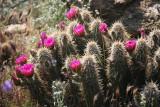 Blooming Hedgehog