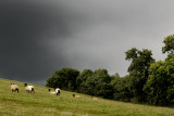 storm threatening sheep