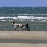 trotting on Holkham beach, Norfolk
