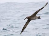 Monterey Bay Pelagic Seabird Cruises