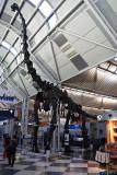 2009-11-15 Dinosaur