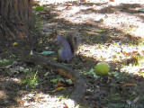 2007-10-31 Snacking