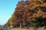 2007-11-25 Foliage