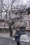 Cherry Blossoms 029mly.jpg