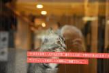 Cat Petting Café 045.jpg