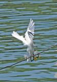 Herons, Egrets, Storks