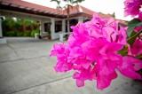 31 A Close Up Shot of A Pink Flower.jpg