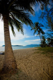 48 Coconut Trees and Beaches.jpg