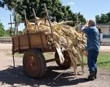 Sugar Cane Husks