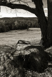 Stump, Rock. Tree and Field