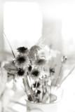Backlit Bouquet Remnant