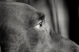 Spicer Close-up Monochrome