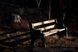 Evening Bench