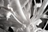 IR Plant Macro #2