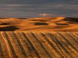 Harvest On The Palouse