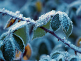 Frost on The Brambles