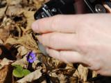 De första sipporna smög bland fjolårsbladen