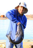 Catching Catfish on the TN River
