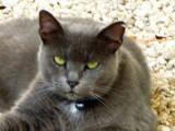 Emerald eyed  male cat