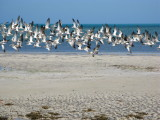 Terns in action