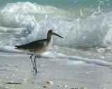 Wildlife/Large Birds