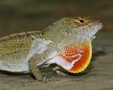 Wildlife/Reptiles & Amphibians