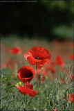 British Wild Flowers 2009