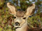 Oh Deer!...Lockjaw