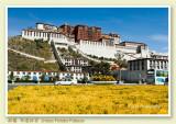 Tibet 2007 西藏