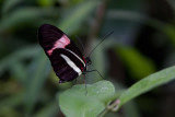 Butterfly-1 *.jpg