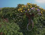 Flower Bike *.jpg