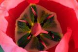 Inside Red *.jpg