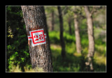 Alpilles - Provence 3