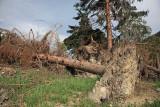 After storm po neurju_MG_15711-1.jpg