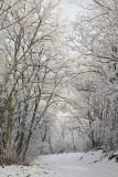 Winter path zimska pot_MG_5849-11.jpg