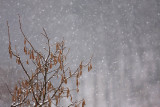 Snowing sne¾enje_MG_5262-11.jpg