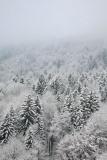 Winter forest zimski gozd_MG_5947-11.jpg