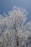 Crusted snow  sre¾_MG_6023-11.jpg