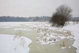 Rače pond in winter Rački ribniki pozimi_MG_6495-11.jpg