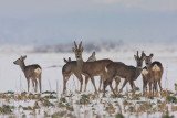 Herd trop_MG_9966-11.jpg