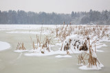 Rače ponds in winter_MG_6503-11.jpg