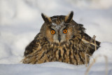 birds_of_prey_raptors_owls