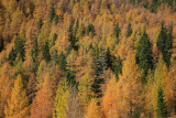 Autumn forest jesenski gozd_MG_1984-11.jpg
