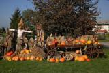 Autumn celebration_MG_7099-1.jpg