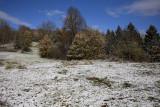 First snow prvi sneg_MG_7211-1.jpg