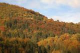 Forest gozd_MG_7492-1.jpg