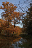 Forest gozd_MG_7945-1.jpg